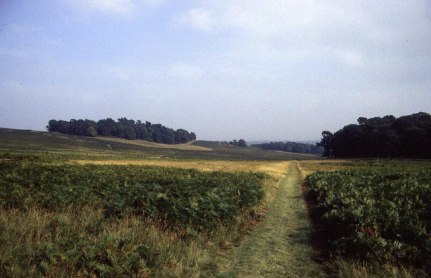 In_Bradgate_Park_Country_Park_-_geograph.org.uk_-_304998